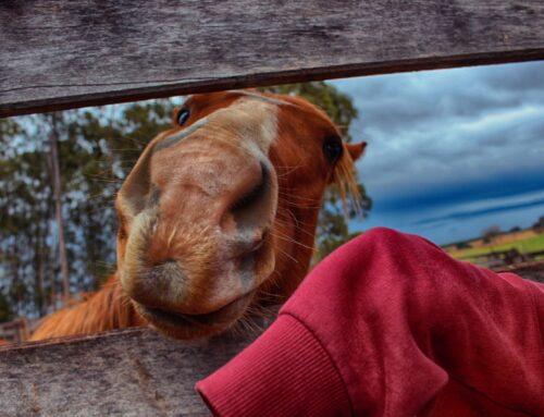 Nieuw paard – en gelijk aan het werk?