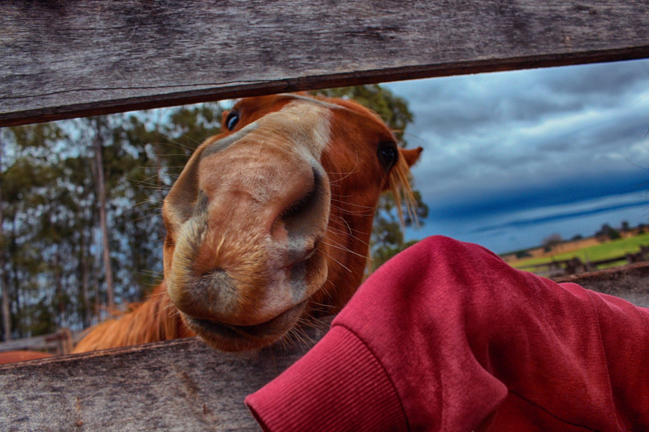 Nieuw paard laten wennen?