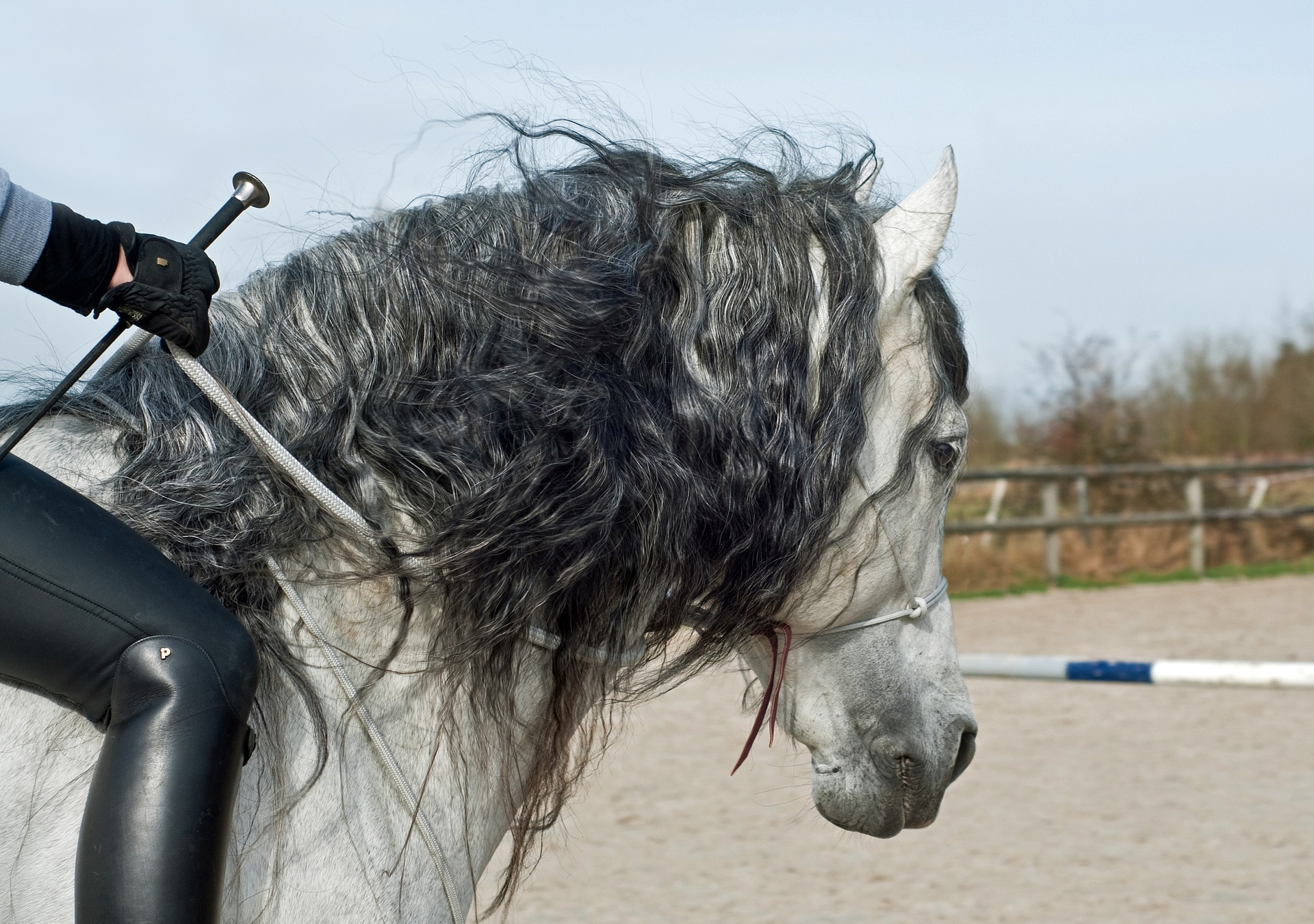 Wat heb jij of je paard nodig om te groeien?